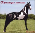 fantastique tennessee